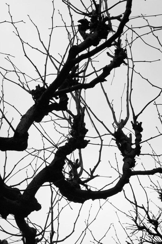 Ink-drunk Twigs no.1